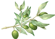 Olive_oil_home