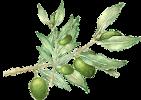 azienda_concadoro_olio_d'oliva