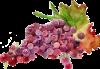 azienda_concadoro_vino
