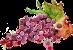 Uva_vino chianti classico azienda concadoro castellina chianti siena